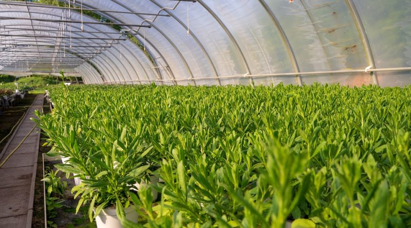 Coronavirus : acheter plantes sur Internet