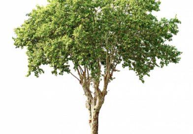diagnostic arbre malade