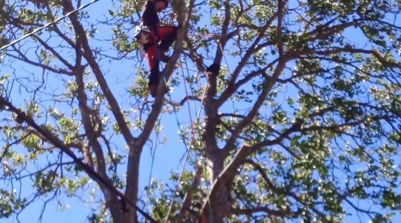 à quelle période tailler les arbres