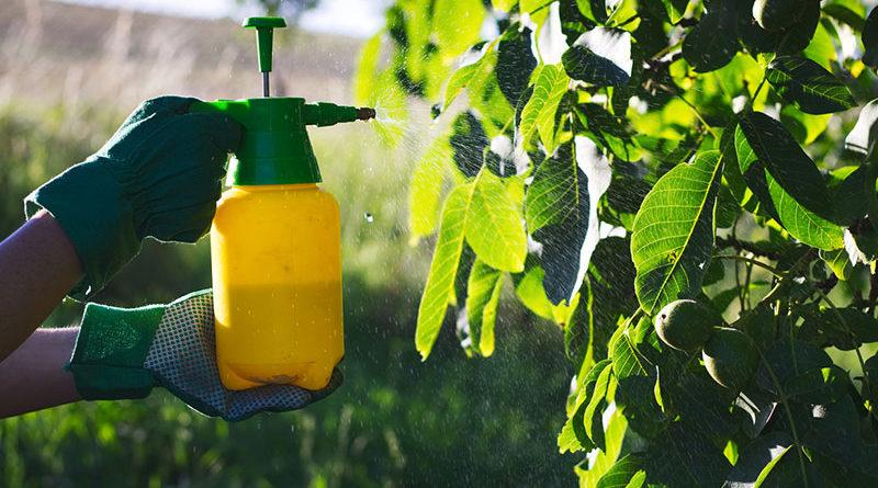 débarrasser les plantes des parasistes