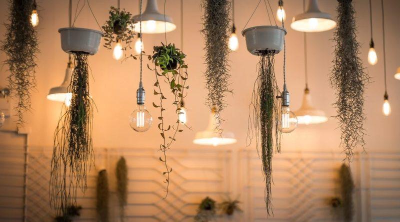 décoration intérieure plante