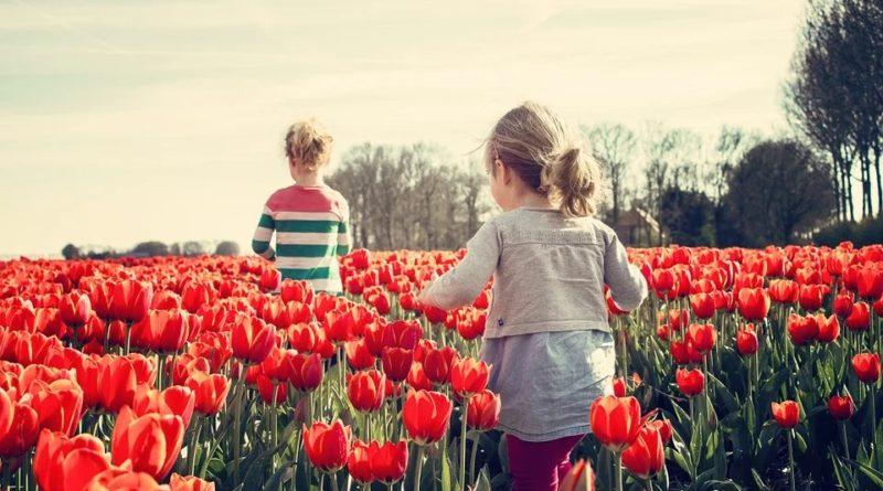 fleur bulbe tulipe
